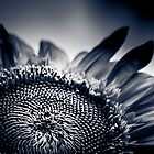 Moody Sunflower  by IamPhoto