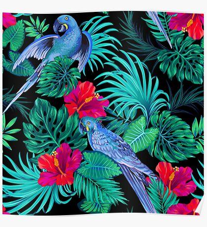 blue macaw parrots.  Poster