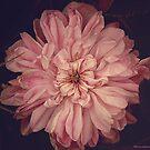 Pink by Cathleen Tarawhiti