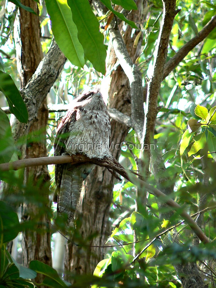 Frogmouth #1 all by Myself by Virginia McGowan