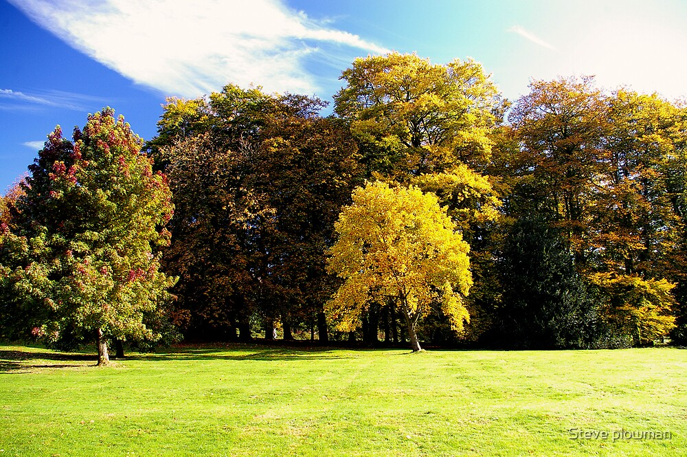 Autumn trees by Steve plowman