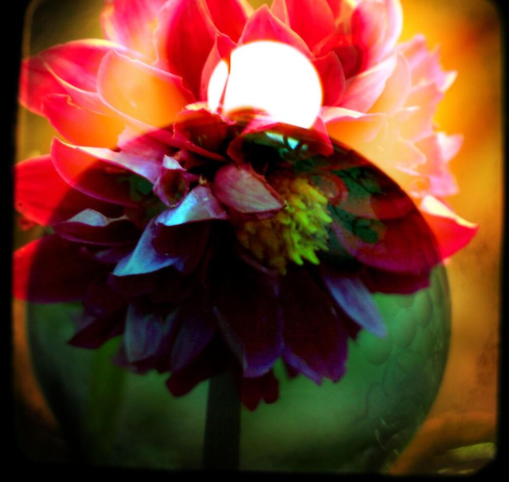 dahlia bulb by Morgan Kendall