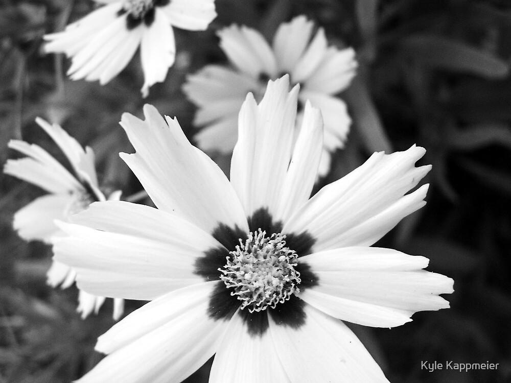 Flowers in July by Kyle Kappmeier