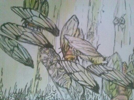 Cicada Wings by lisasilver
