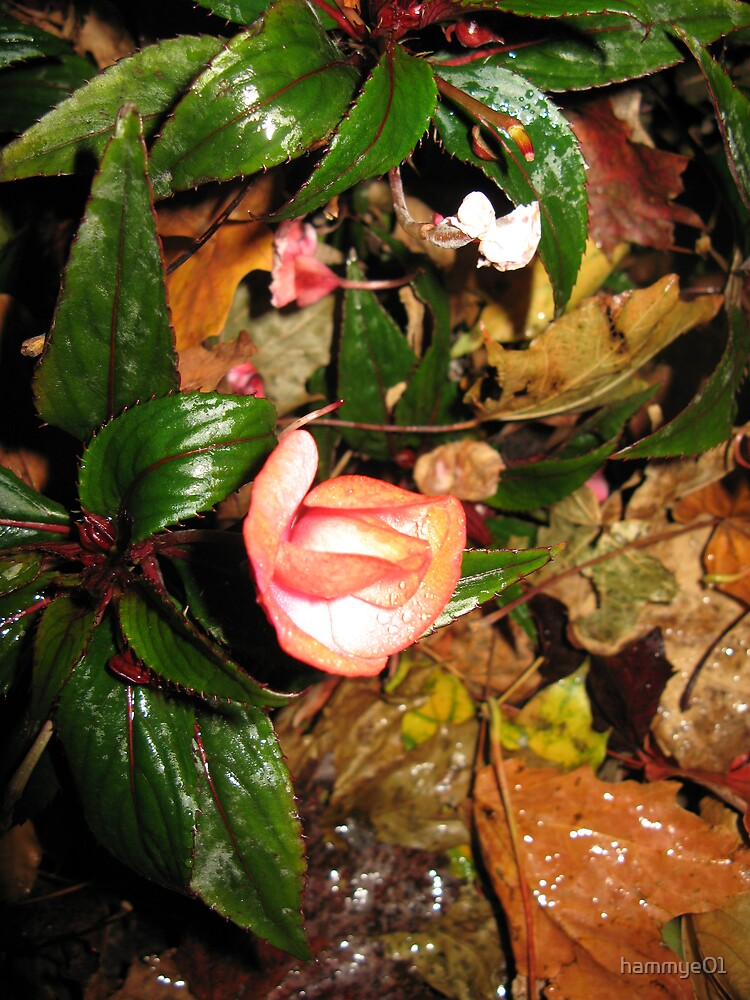 Flowers of the night by hammye01
