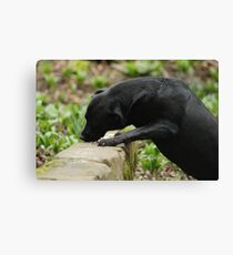 Dog Eating Bird Food Canvas Print