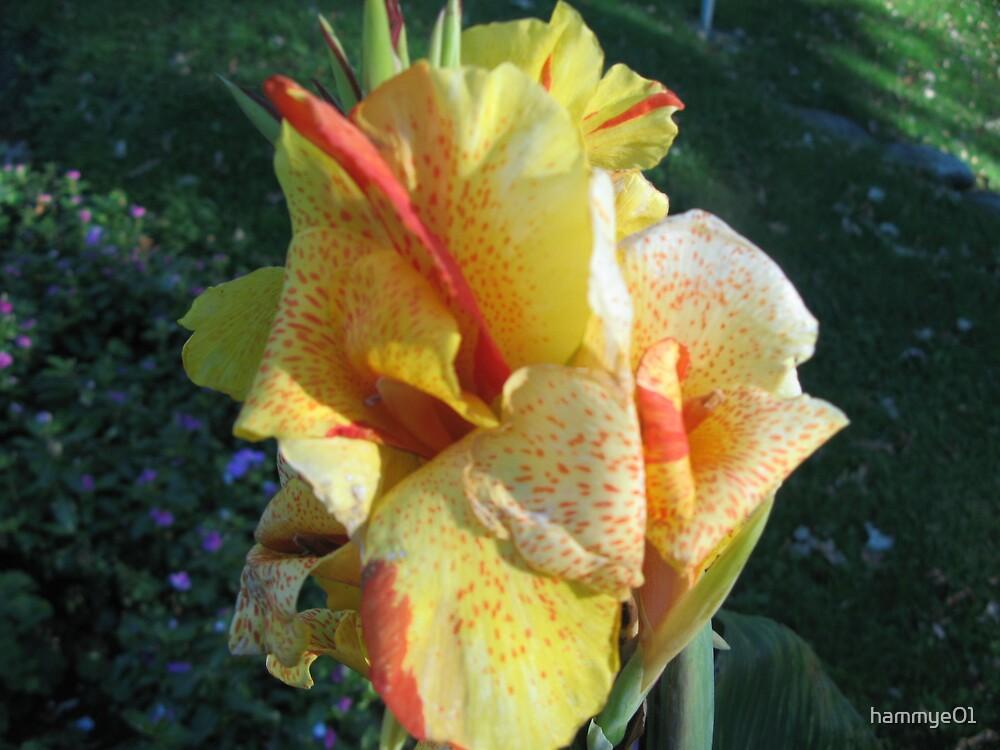 Iris by hammye01