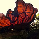 Back lit mushroom. by Livvy Young