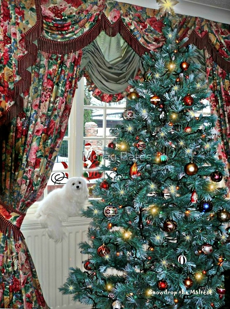 Snowdrop the Maltese - Christmas Morning by Morag Bates