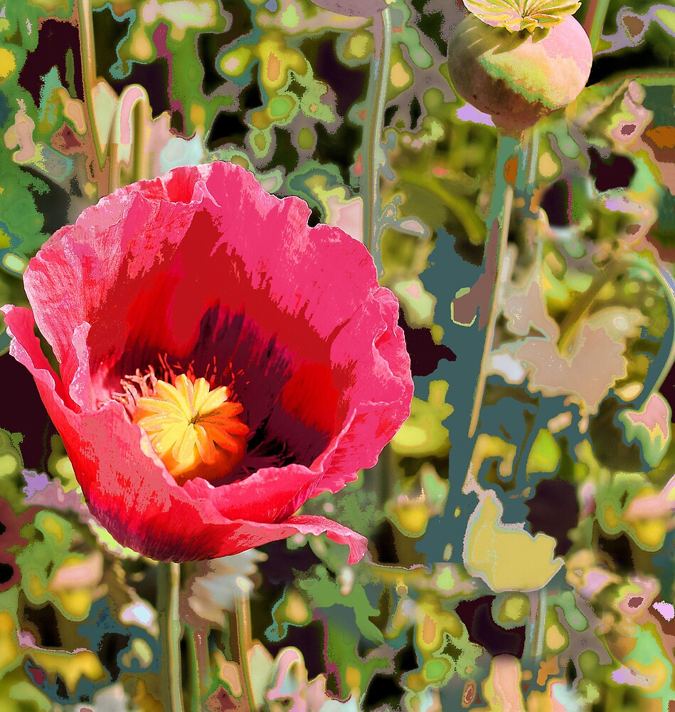 Poppy love by chrissydolson