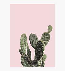 Prickly Cactus Photographic Print