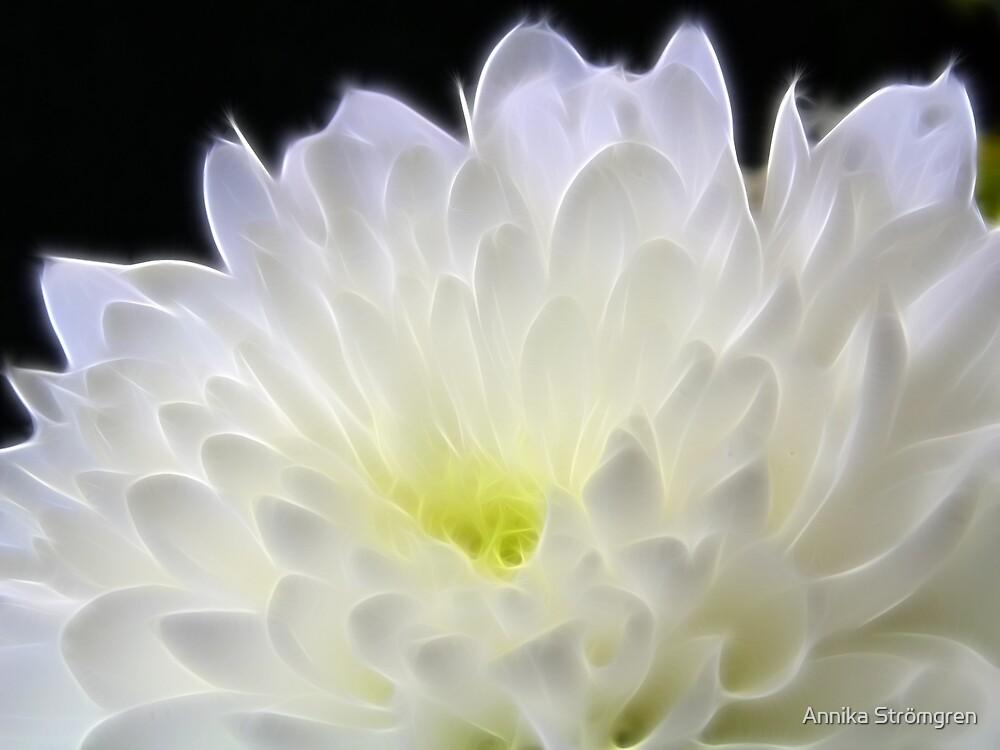 Glowing flower 2 by Annika Strömgren