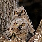 """""""WE DON'T GIVE A HOOT!"""" by FSULADY"""