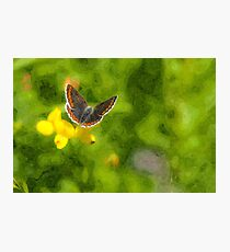 Artwork - Brown Argus Photographic Print