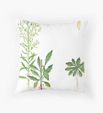 Erigeron canadensis Throw Pillow