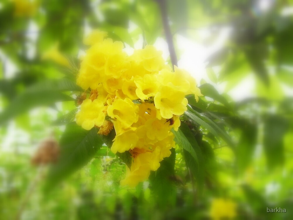 Bunch of Yellows by barkha