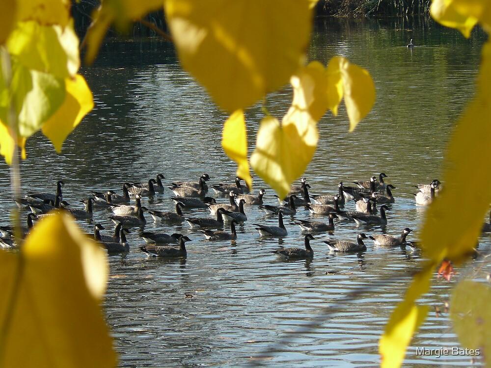 Autumn Afternoon Swim by Margie Bates