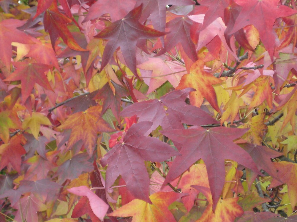 Colour of the Autumn by Zuryn