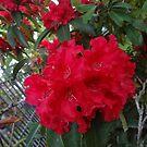 Flower  by WaleskaL
