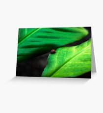 Little Guy Greeting Card