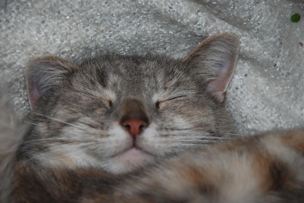 Crouching Tiger, Sleeping Kittie! by Maddie
