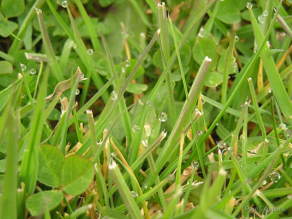 Dew on Grass by Paul Campbell