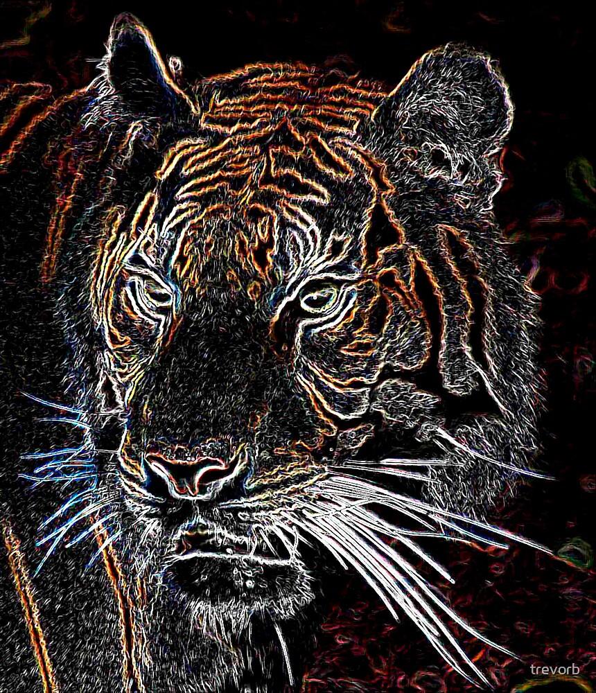 Tiger by trevorb