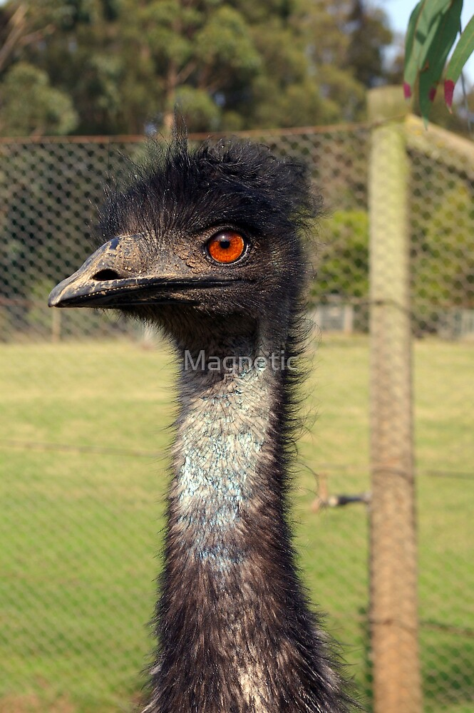 Emu by Magnetic