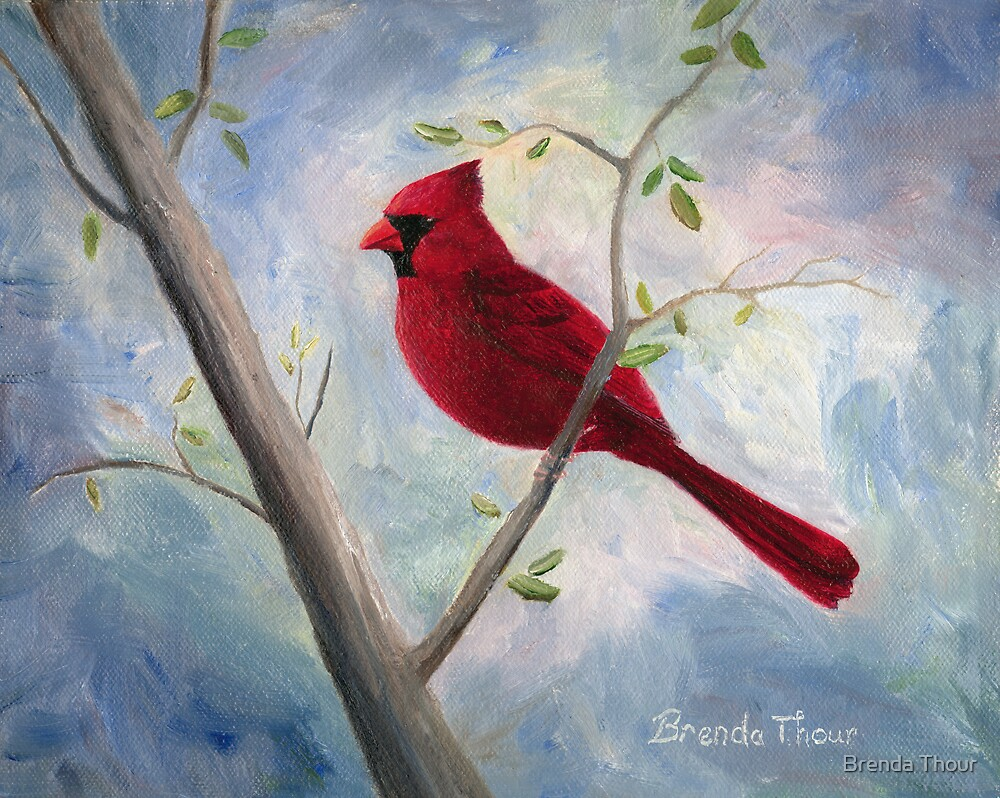 Cardinal by Brenda Thour
