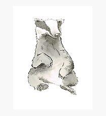 Badger Photographic Print
