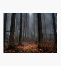 Misty Path to Flat Top Mountain Photographic Print