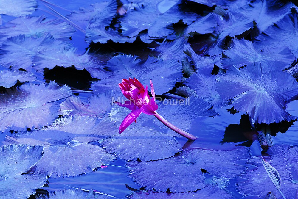 Okinawan Abstract Flower... by Michael Powell