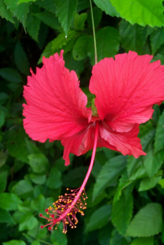 Tropical flower 5 by StudioN