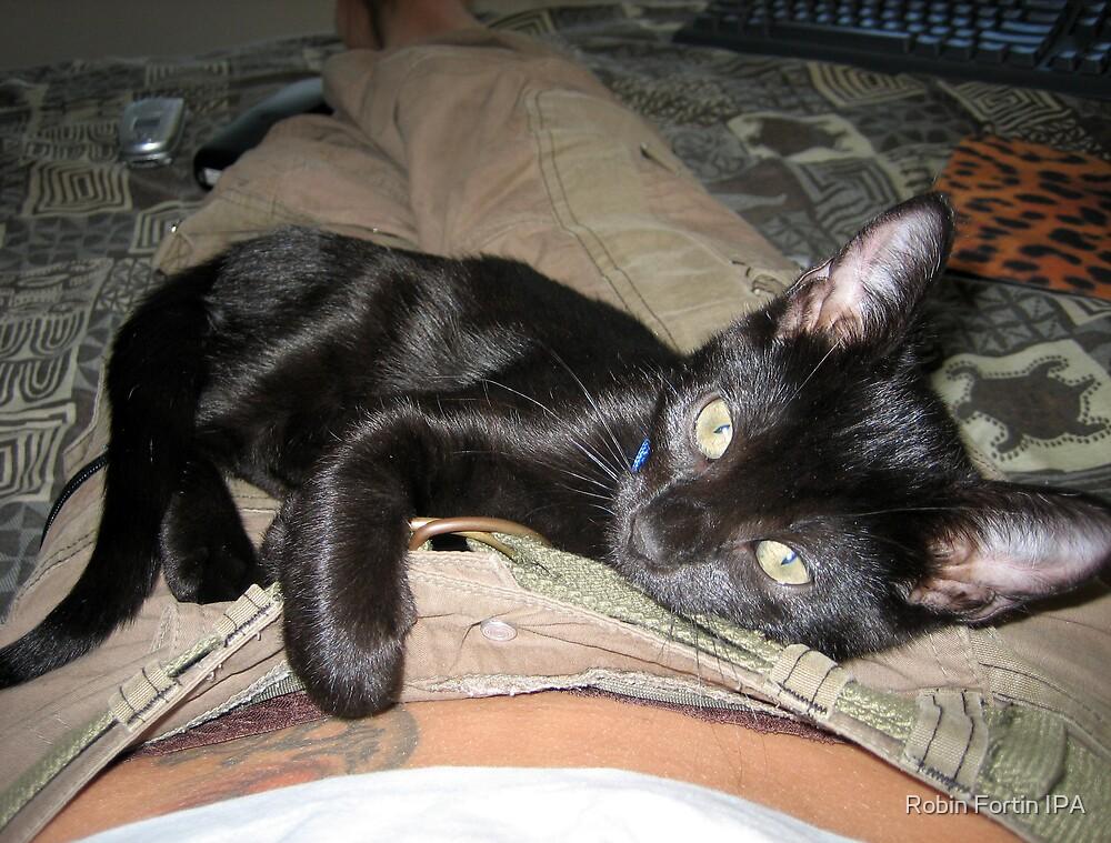 Me & My Kitten, Scrabble by Robin Fortin IPA