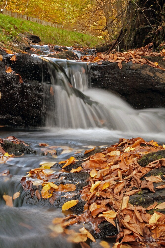 Fall Stream by timpollock