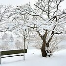 I Love Winter White ... by Poete100