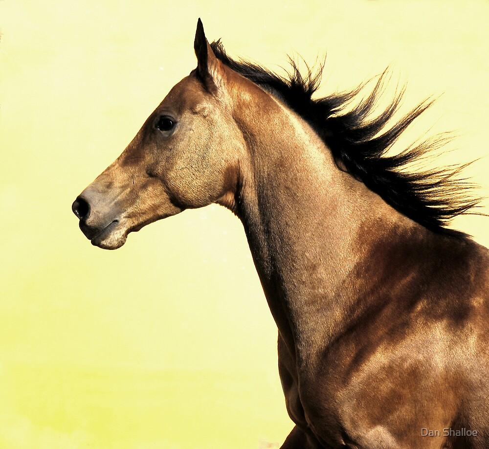 Golden gallop by Dan Shalloe