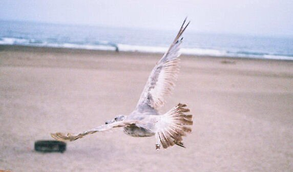 Flying  by outlawedwings