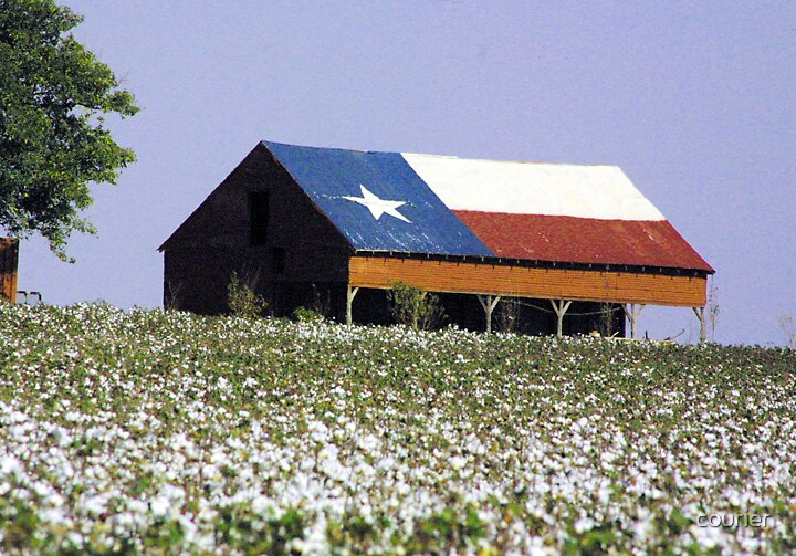 Texas Flag barn in cotton patch by courier