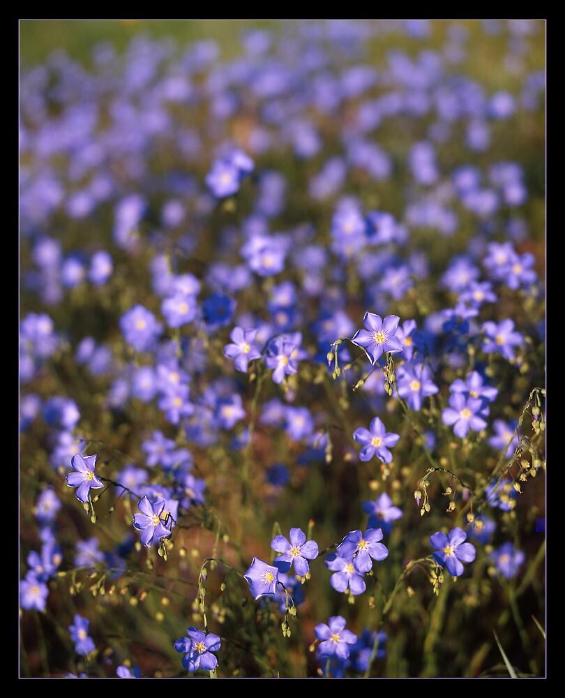 Blue  by mymamiya