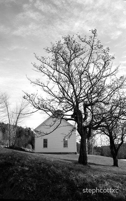 Tree Skeletons by stephcottxc