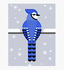 J is for Jay Photographic Print