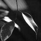 Leaves by Scarlet