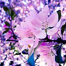 Cherry Blossoms by monicamakesthings
