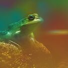 Frog by monicamakesthings