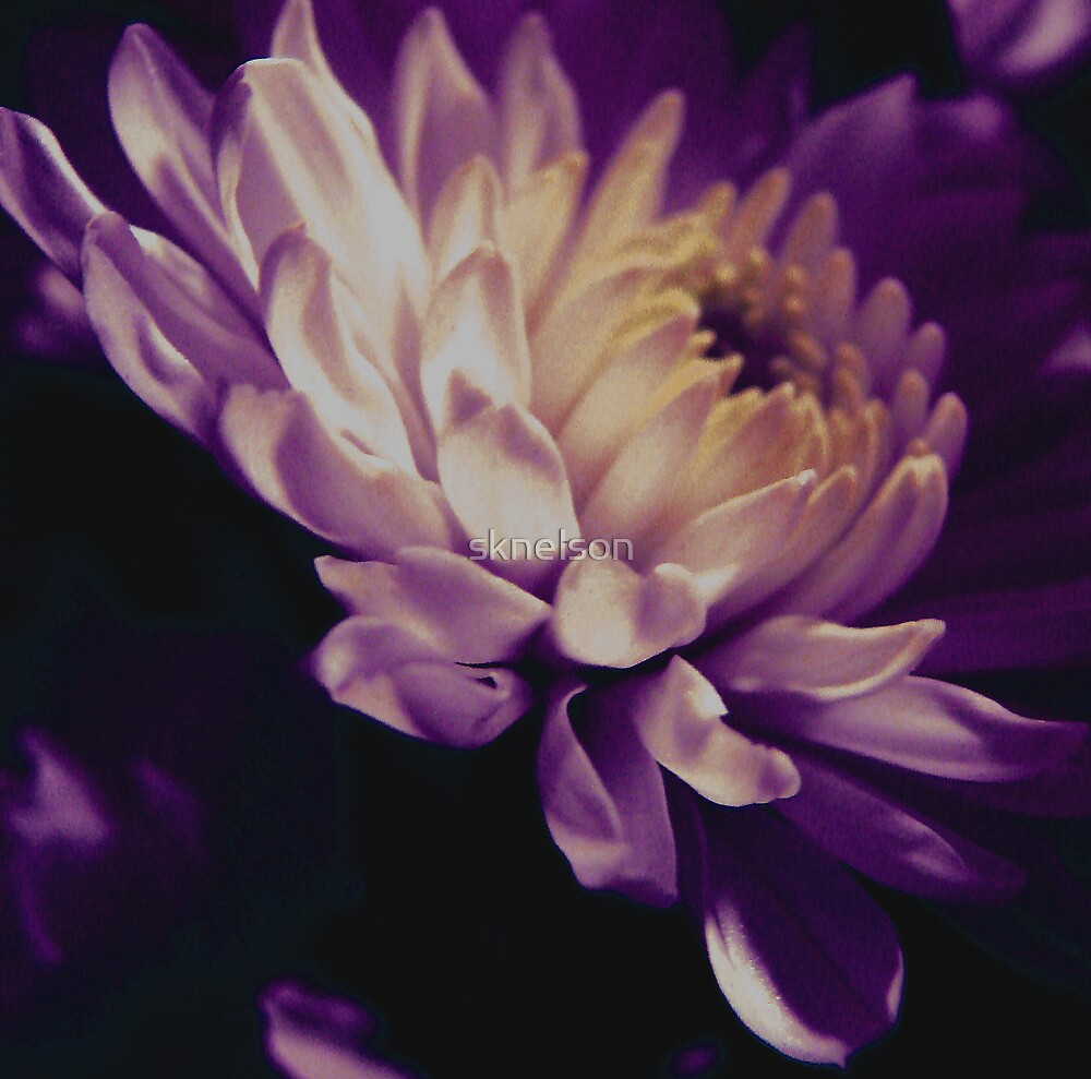 A Passion for Purple by sknelson