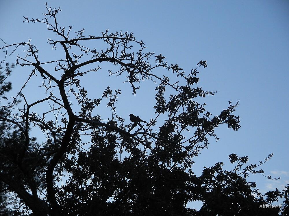 Black Blue Bird by alittleelf