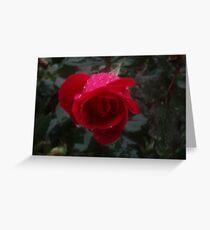 rose with rain Greeting Card