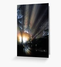 Forest Sunrays III Greeting Card