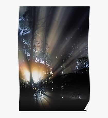 Forest Sunrays III Poster
